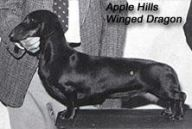 Apple Hills Winged Dragon
